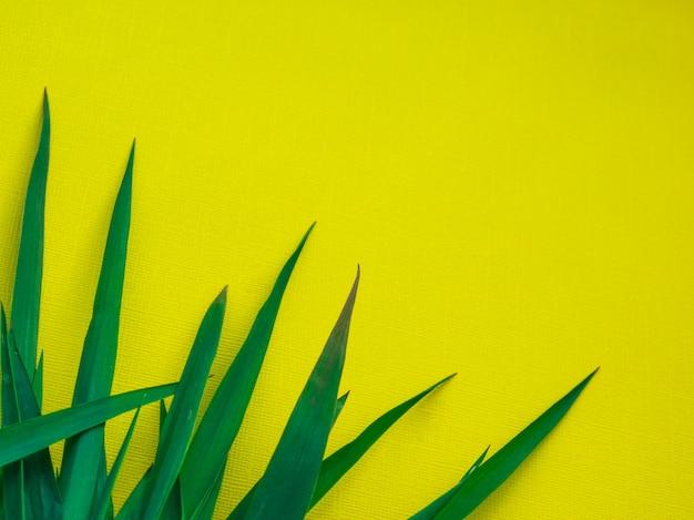 緑の葉のテクスチャー/葉のテクスチャーの背景/コピースペース