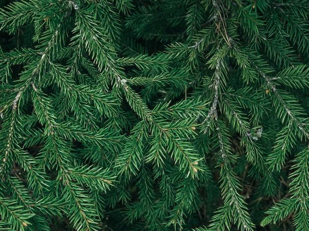 緑のモミの木のテクスチャ/葉のテクスチャ背景/コピースペース