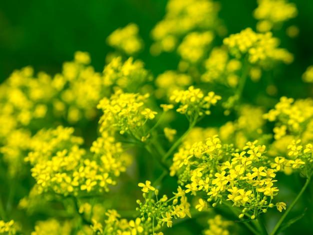 黄色い花の花
