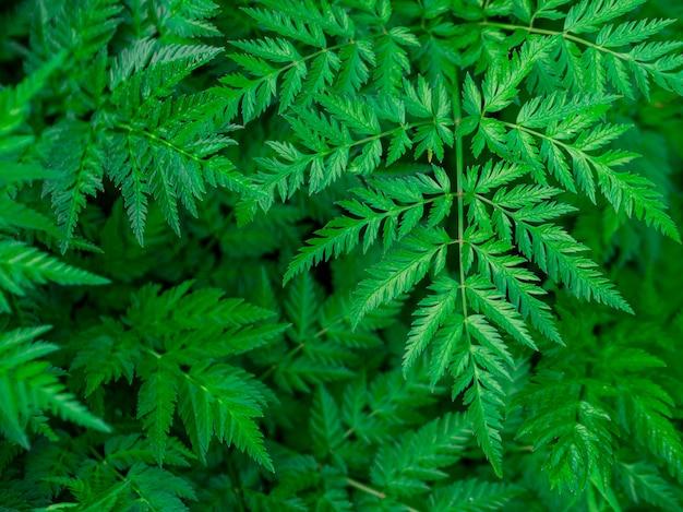 緑の葉のテクスチャ/葉のテクスチャ背景/コピースペース。夏のコンセプトです。