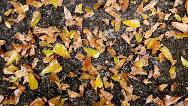 フローラルの黄色の葉