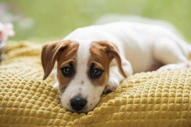 悲しい犬が窓の上に横たわって、飼い主を待っています。