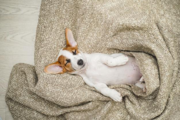 毛布で寝ているかわいい子犬。