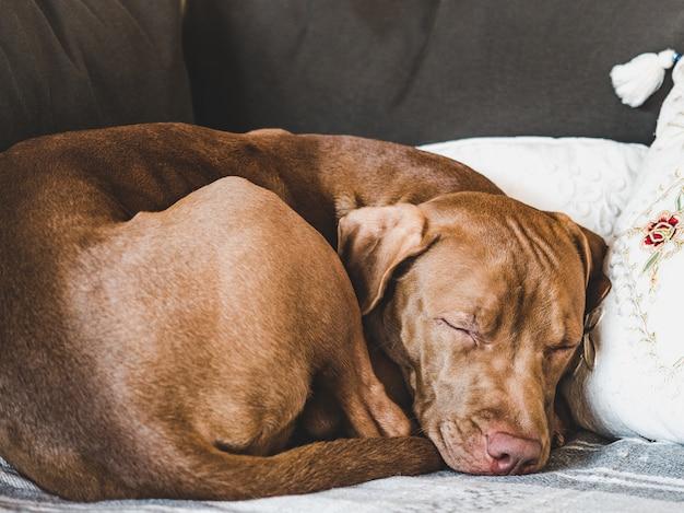 Сладкий щенок спит на мягкой клетке