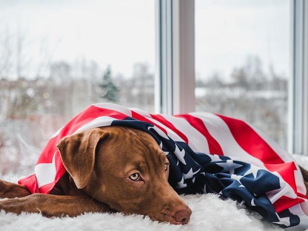 アメリカの国旗を持つ若い、魅力的な子犬