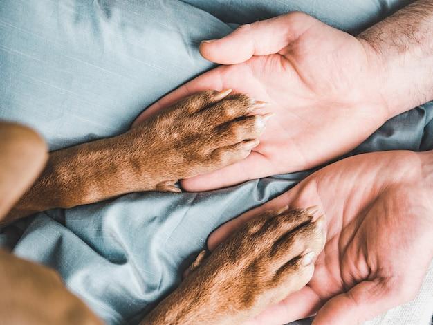 Мужские руки держат лапы молодого щенка