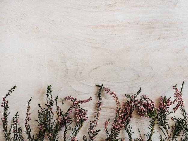 木製の背景に横たわっている美しい野生の花