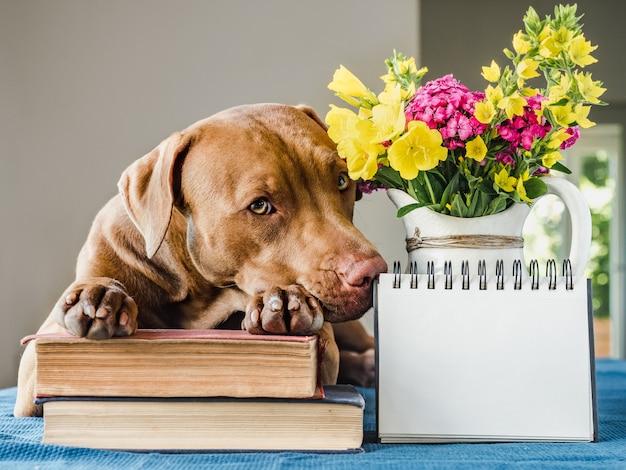 Красивый букет цветов и милый щенок