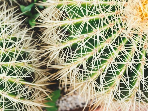 明るく、とげのあるサボテン。上面図。熱帯の背景