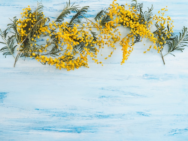 青、白の表面に美しい、咲くミモザの花