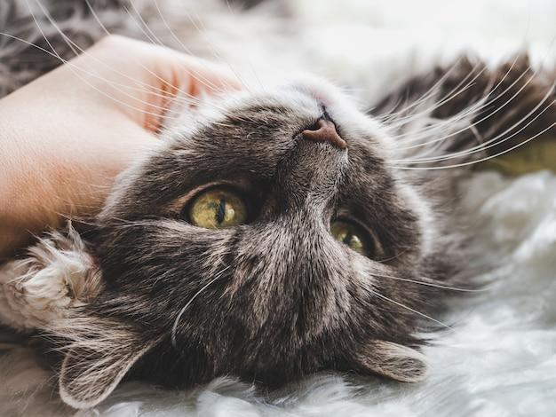女性の手とかわいい、魅力的な、優しい子猫