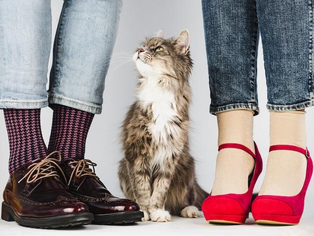 かわいい、魅力的な子猫と若いカップルの足