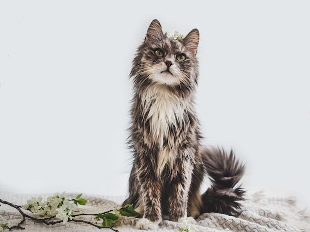 白地にかわいい、魅力的な子猫
