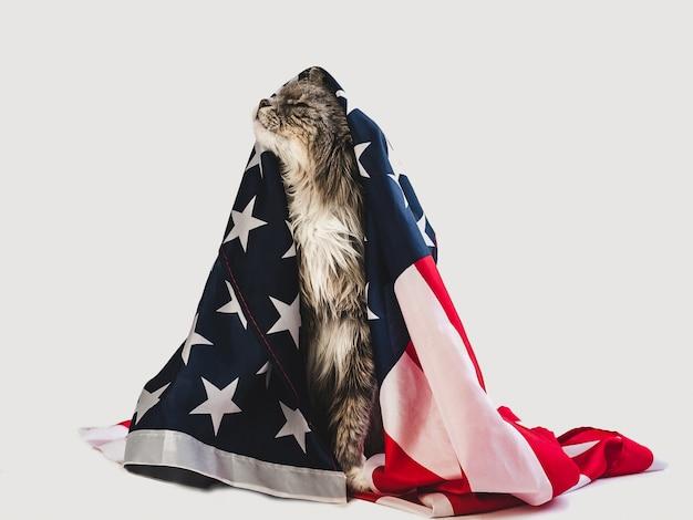 かわいい子猫とアメリカの国旗。