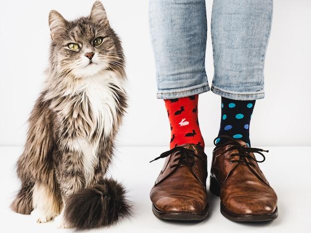 魅力的な子猫と男性の足。スタジオ写真