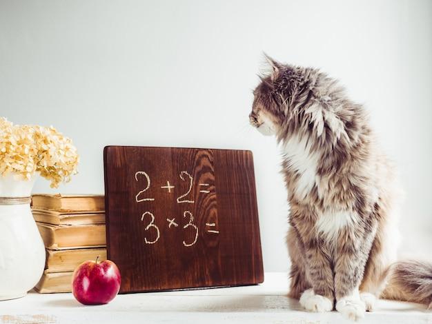ふわふわの子猫、ヴィンテージの本、赤いリンゴと茶色の黒板