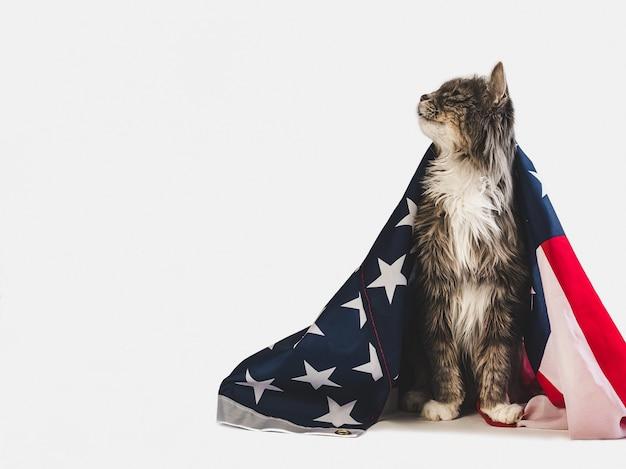 かわいい子猫とアメリカの国旗。スタジオ撮影