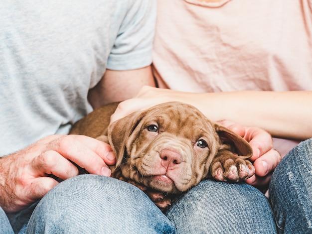 Милый щенок и заботливая пара. уход за животными