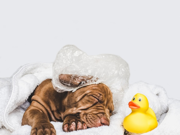 魅力的な子犬、白い敷物の上に横たわる