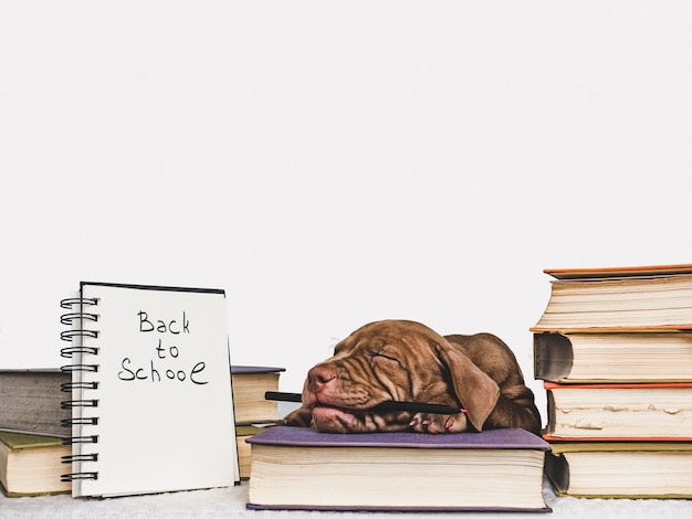 かわいい子犬とビンテージの本。学校に戻る