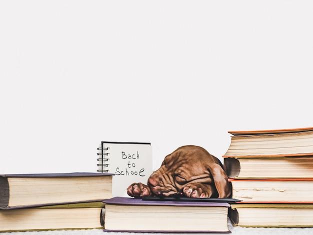 眠っているかわいい子犬とビンテージの本