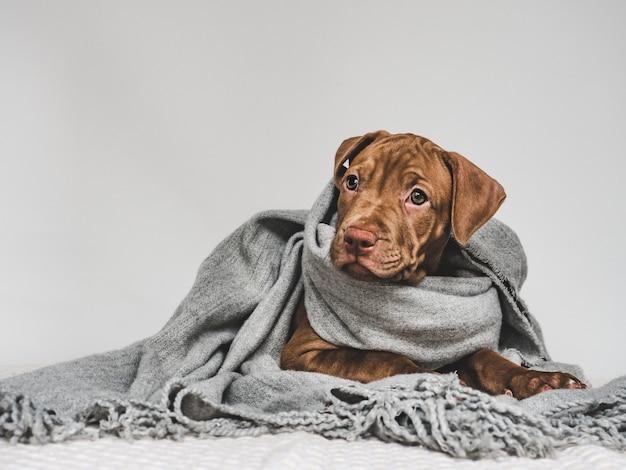 Молодой щенок, завернутый в серый шарф