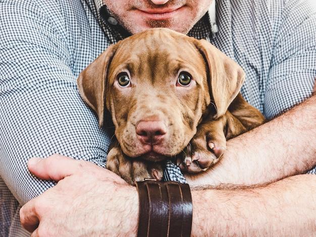 Человек обнимает молодого, очаровательного щенка. крупный план