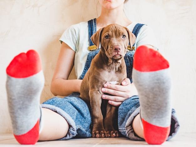 Красивая женщина и молодой щенок.