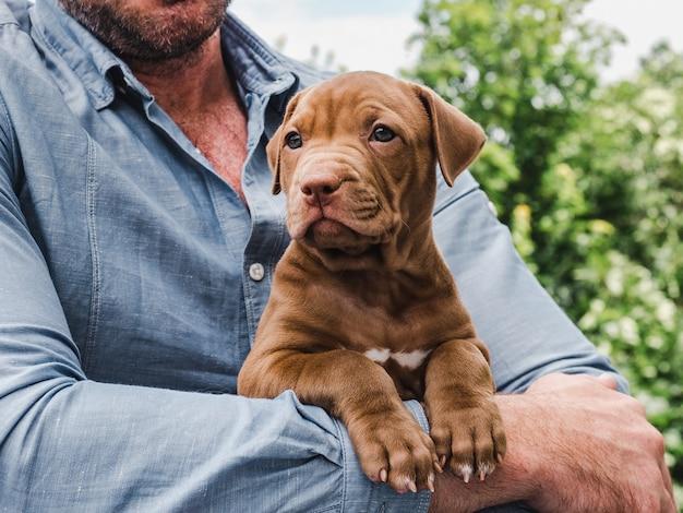 チョコレート色の子犬と彼の所有者