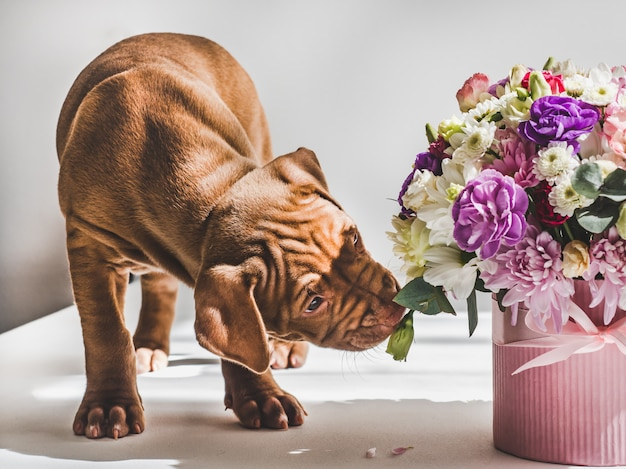 若い、魅力的な子犬と明るい花束。