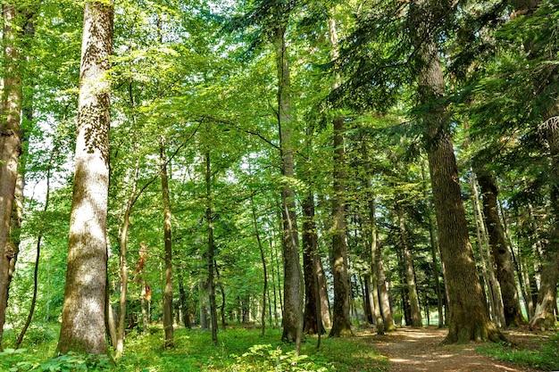 森の木自然グリーンウッド晴れた日