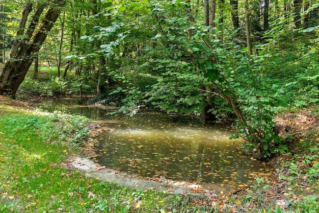 緑豊かな沼と熱帯林のシーン。