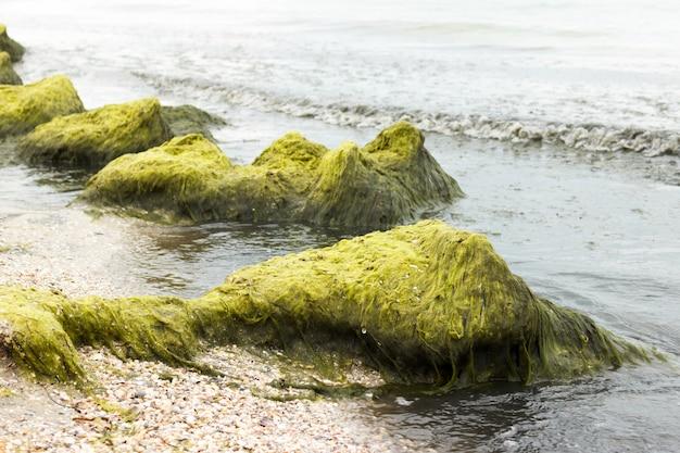 曇りの日にビーチフロントの石の上の海藻。生態学および自然災害の概念