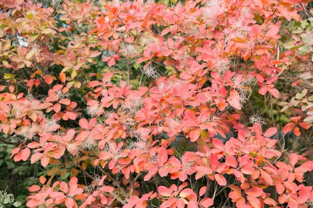 カエデの木の下で秋のカラフルな赤い葉