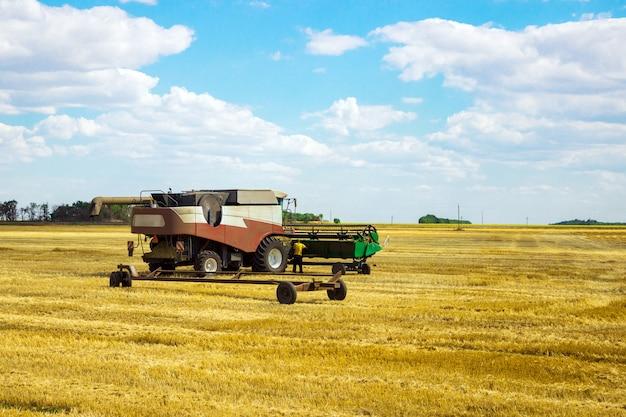 コンベインは小麦を収穫します。フィールドの農業機械。穀物の収穫。