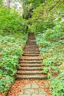 森や公園の小道。木の路地