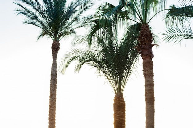 煙の中のヤシの木。ヴィンテージポスト処理済み。休暇と熱帯のビーチのコンセプト