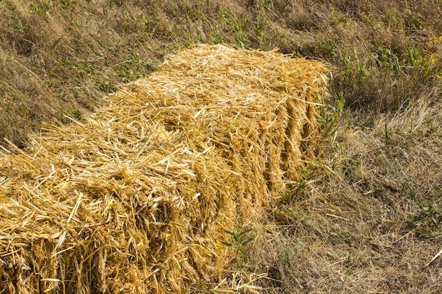 日没時のフィールドの上に横たわる収穫の押されたわら練炭
