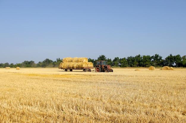 干し草とトラクター。干し草を運ぶトラクター。干し草の俵がカートに積み上げられました。