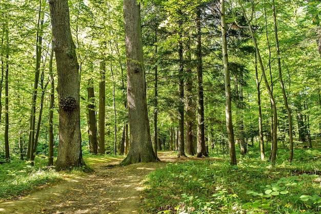 森の木自然の緑の木の背景晴れた日