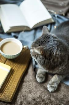 一杯のコーヒーと本の横にある毛布の上の灰色のふわふわのペット猫