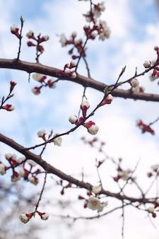Натуральное растение фон и текстура