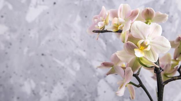 灰色の背景上の自然の花
