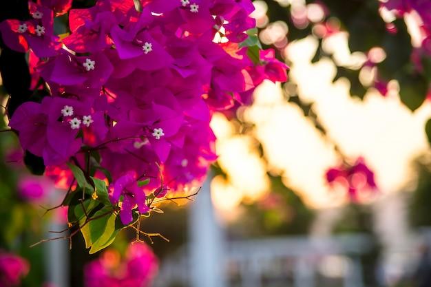 ピンクの花とテキストのための場所の花の自然な背景