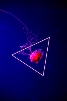 Яркие прозрачные неоновые медузы в аквариуме