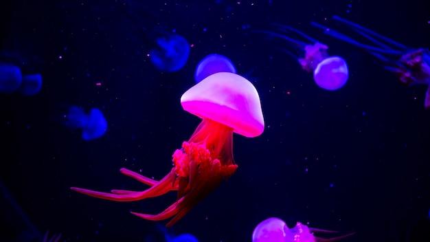 水槽の中の明るく透明なネオンクラゲ