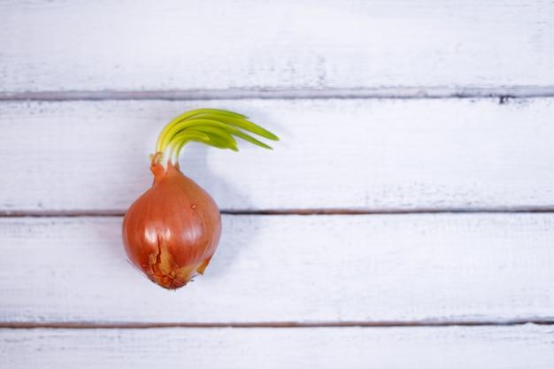 Проросший оранжевый лук, не посаженный в почву, крупным планом на фоне дерева