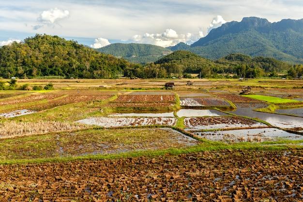 収穫後の田んぼ、田植えのための田畑、ラオス