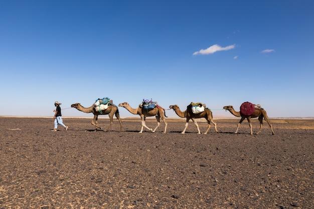 砂漠のキャラバン