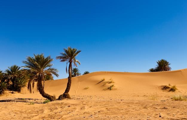 砂漠のオアシスモロッコのヤシ